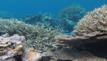 Palmyra Atoll is an uninhabited coral reef ecosystem located in the central tropical Pacific. Palmyra was chosen by the WHOI team as the site for the first coral reef digital twin because a long history of research at the island has amassed a treasure trove of data and models, enabling the team to hit the ground running as they develop the project. Image credit: Michael Fox © Woods Hole Oceanographic Institution