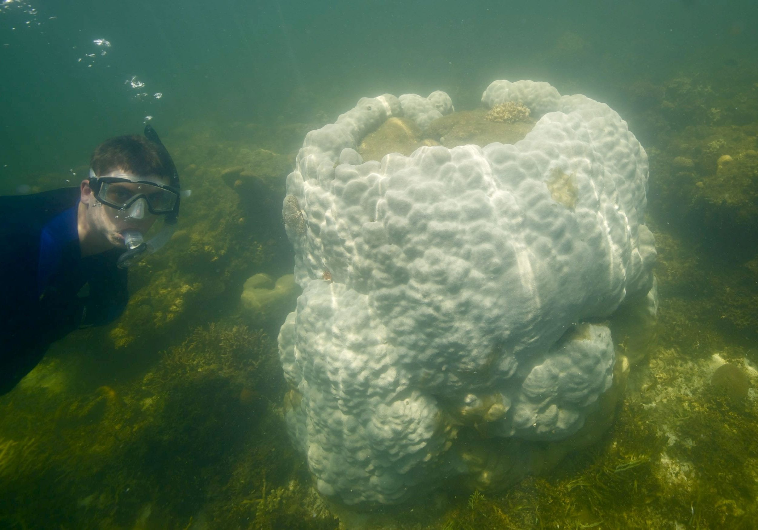 MIT-WHOI Joint Program student  Tom DeCarlo inspecting a bleached coral in the South China Sea.  (Photo by Pat Lohmann, © Woods Hole Oceanographic Institution)