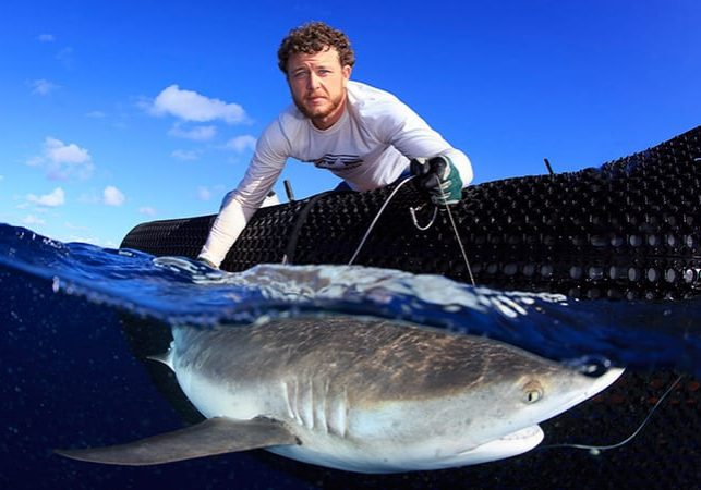 Camrin Braun attaching a satellite tag to a shark for tracking.
