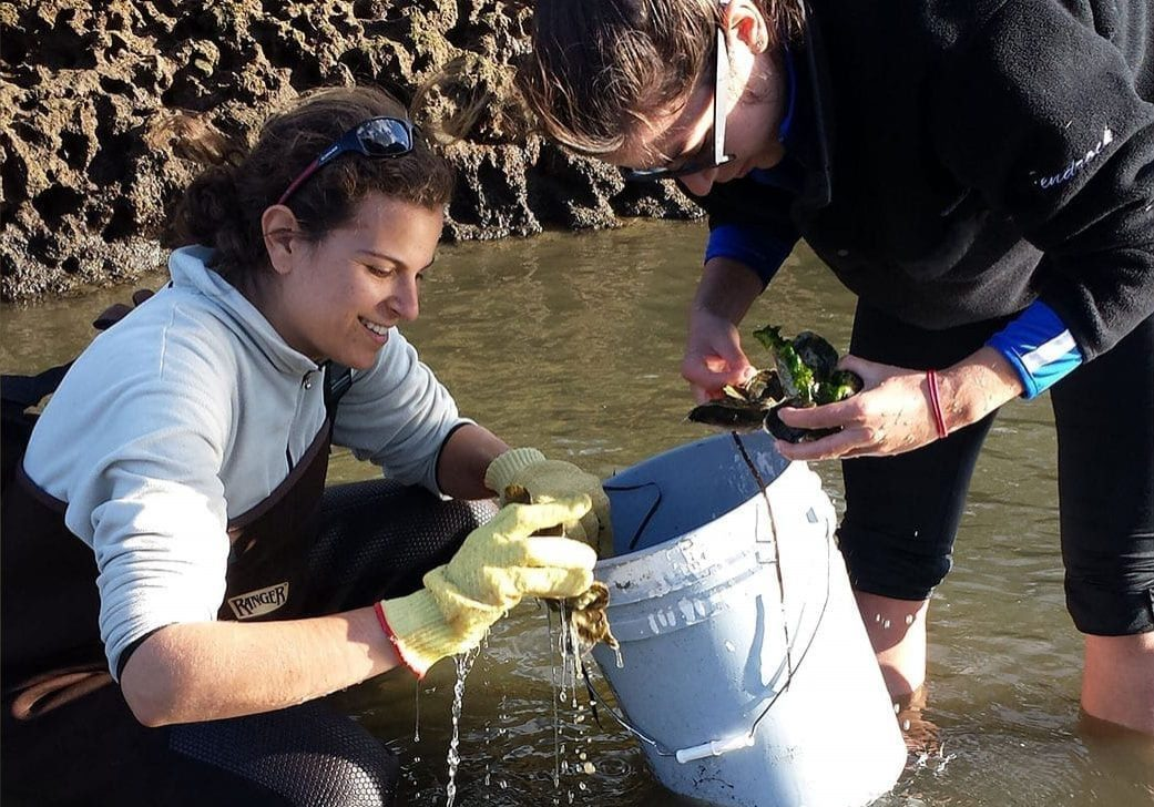 Measuring Oysters
